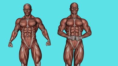 Глубокие мышцы