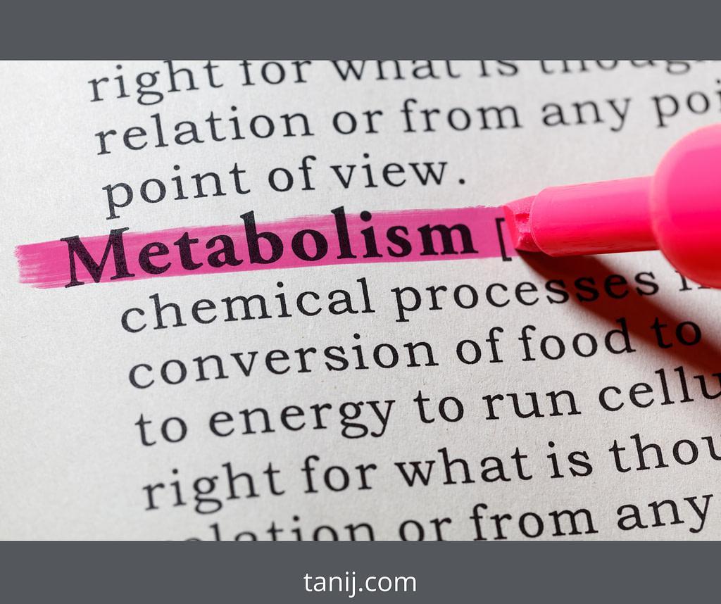 Что такое метаболизм, определение. На что идут калории и как ускорить метаболизм