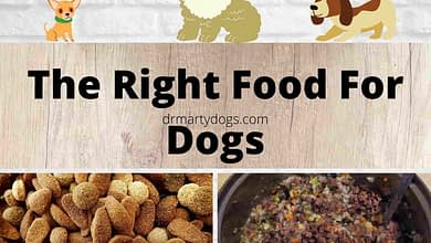 Photo of 2 in 1|The Right Food For Dogs – Large and Small Ones