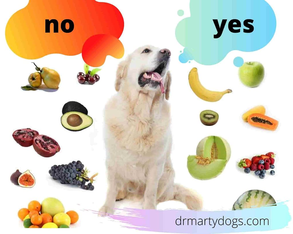 prohibited dog foods and good dog foods