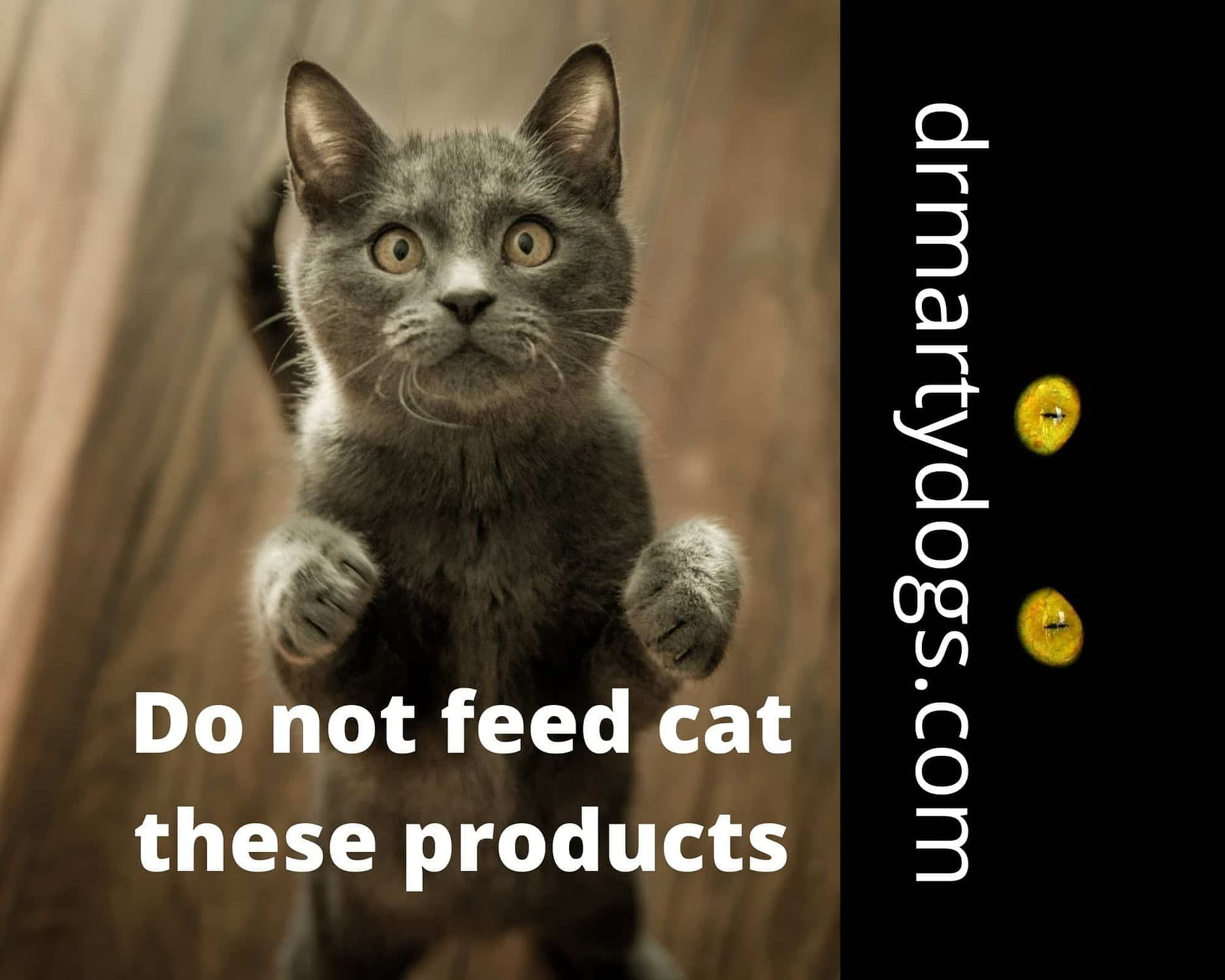 bad foods for cats what do not feed