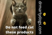 Photo of Food for cats: do not feed your pet this products