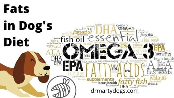 Fats in a balanced dog diet, complete menu for dog
