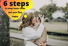 Photo of 6 steps to keep home clean and dog happy
