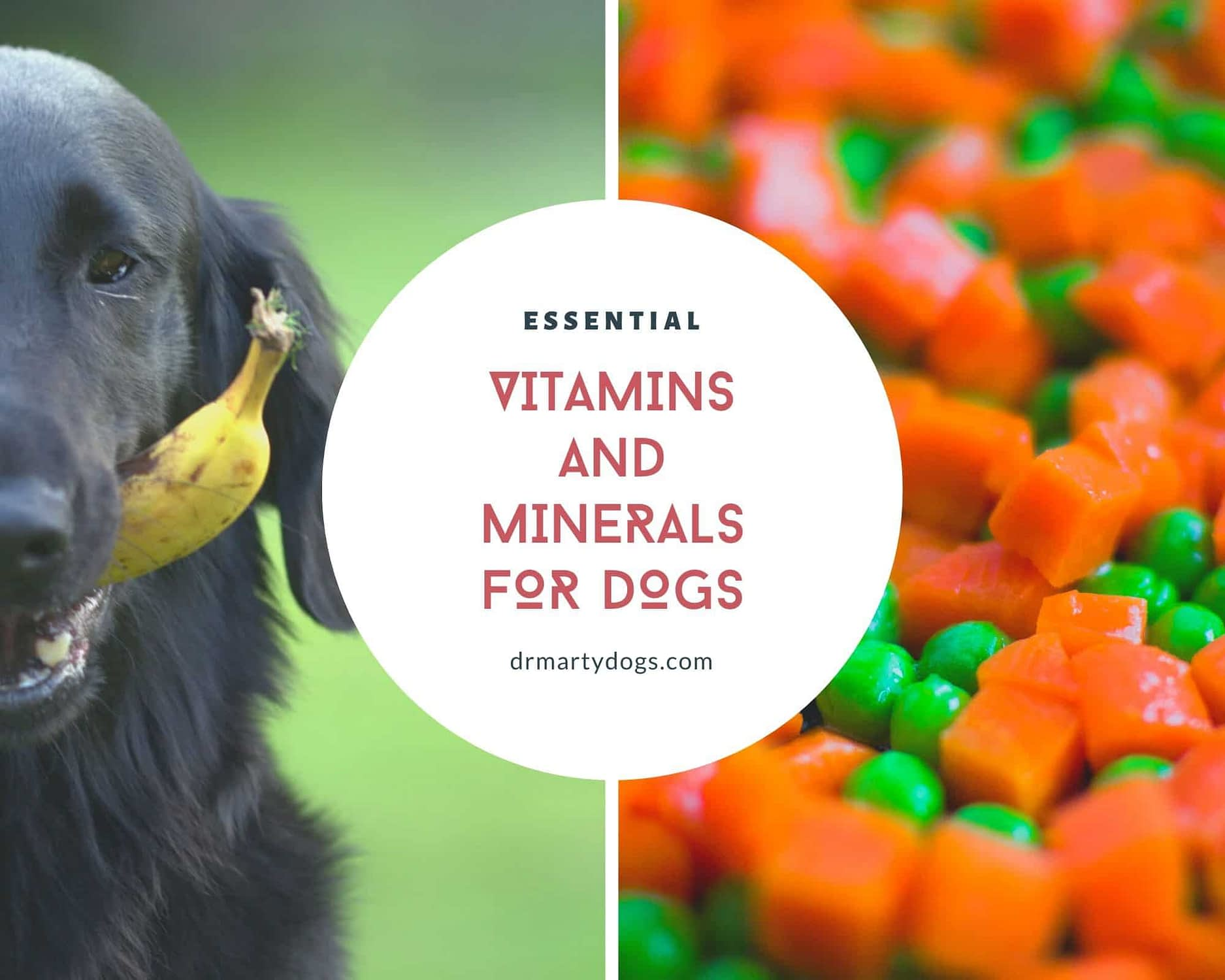 best essential vitamins for dogs and minerals
