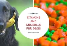 Photo of TOP-7 Best Essential Minerals and Vitamins for Dogs
