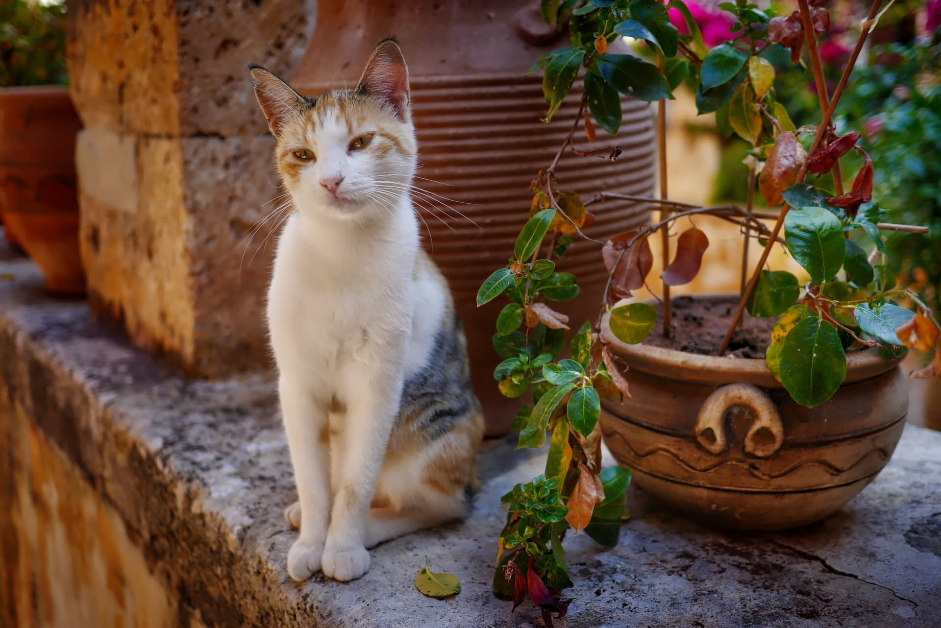 why cats eating houseplants