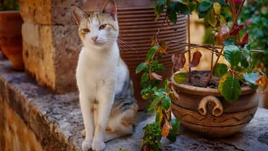 Photo of Poor ficuses: why cats eat houseplants