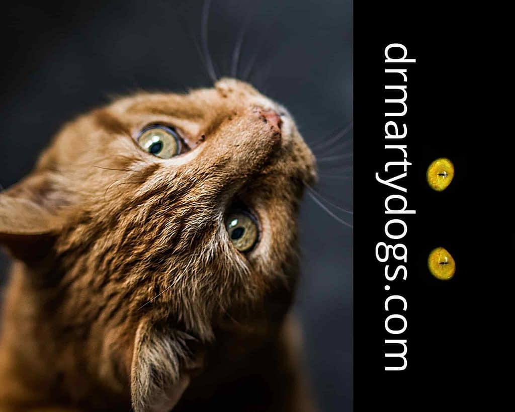HOW TO UNDERSTAND THE BEHAVIOR OF THE CATS, INTERESTING FACTS