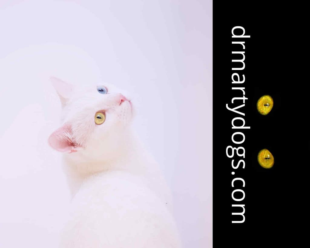 the most interesting feline facts, biggest and smallest cats, how to understand my cats behavior