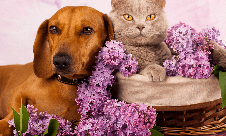 Photo of Can dogs and cats living together?