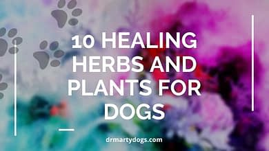Photo of 10 Best Healing Herbs and Plants for Dogs + First Aid-Kit