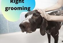 Photo of Basic rules for bathing a dog