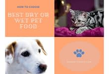 Photo of Honest History: 5 stages of Commercial Pet Food Development