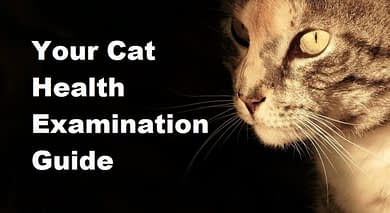 Photo of Check your cat's health: 10 things to examine