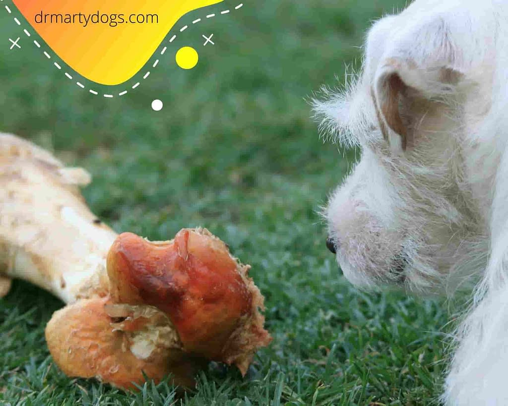 Food for dogs or small breeds