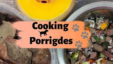 Photo of Homemade balanced dog food recipes: 2 options of porridge