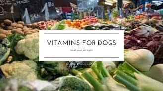 all necessary vitamins for dogs