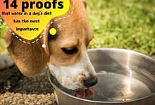 Photo of 14 proofs that water in a dog's diet has the most importance