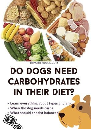do dogs need carbohydrates in their diet. balanced dog food plan