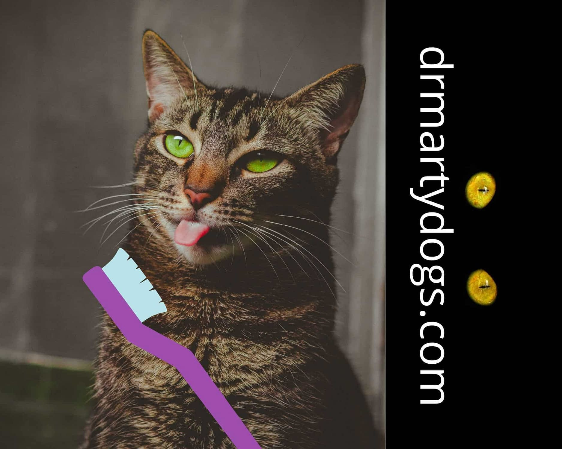 how to brush ca'ts teeth, toothpaste for cats, teethbrush for cats