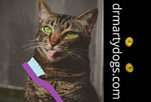 Photo of Brushing cat's teeth: quick guide, easy rools for dummies