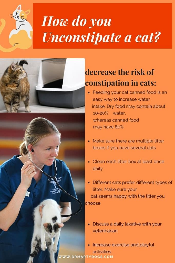 How do you Unconstipate a cat?
